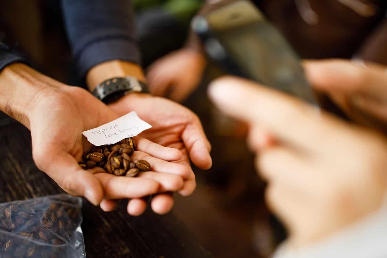 các giống cà phê hiếm tại sơn pacamara